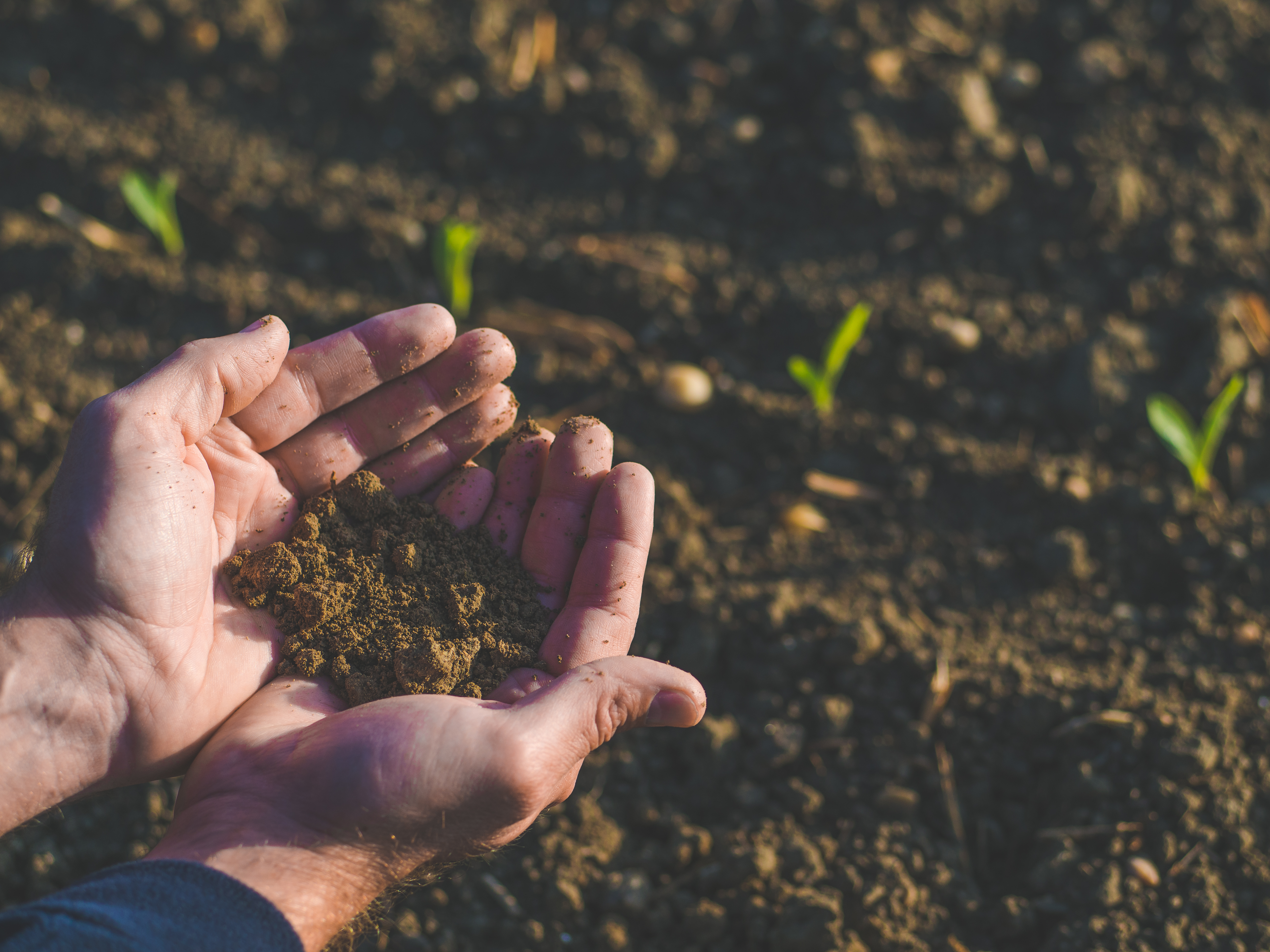 Replenishing N levels in your soil image
