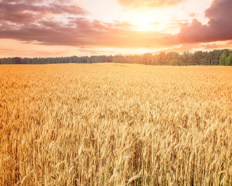 Global Fertilizer Day: Warum benötigen wir Minderaldünger?  image